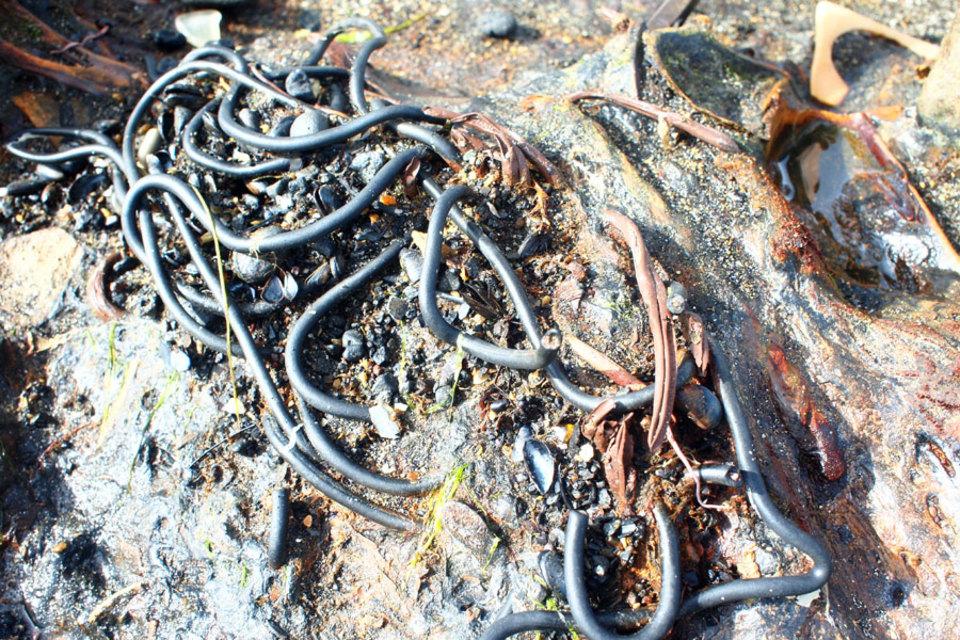 Standard cords