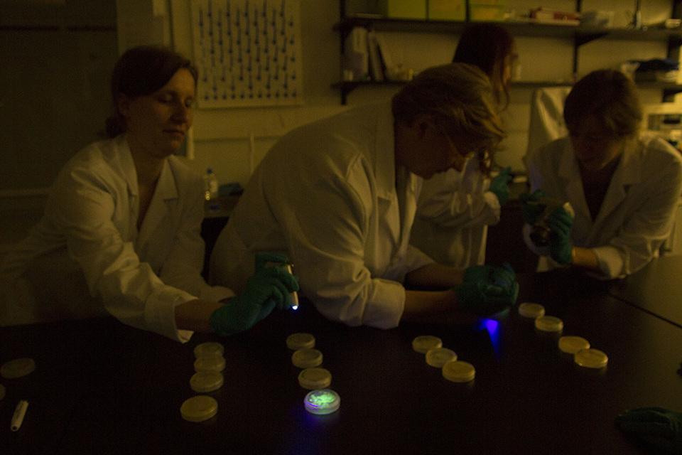 Standard checking gfp e.coli