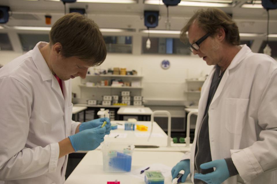 Standard cutting plasmid
