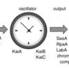 Thumb bacterial circadian clock