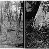 Thumb birch  k1 14 k3 37