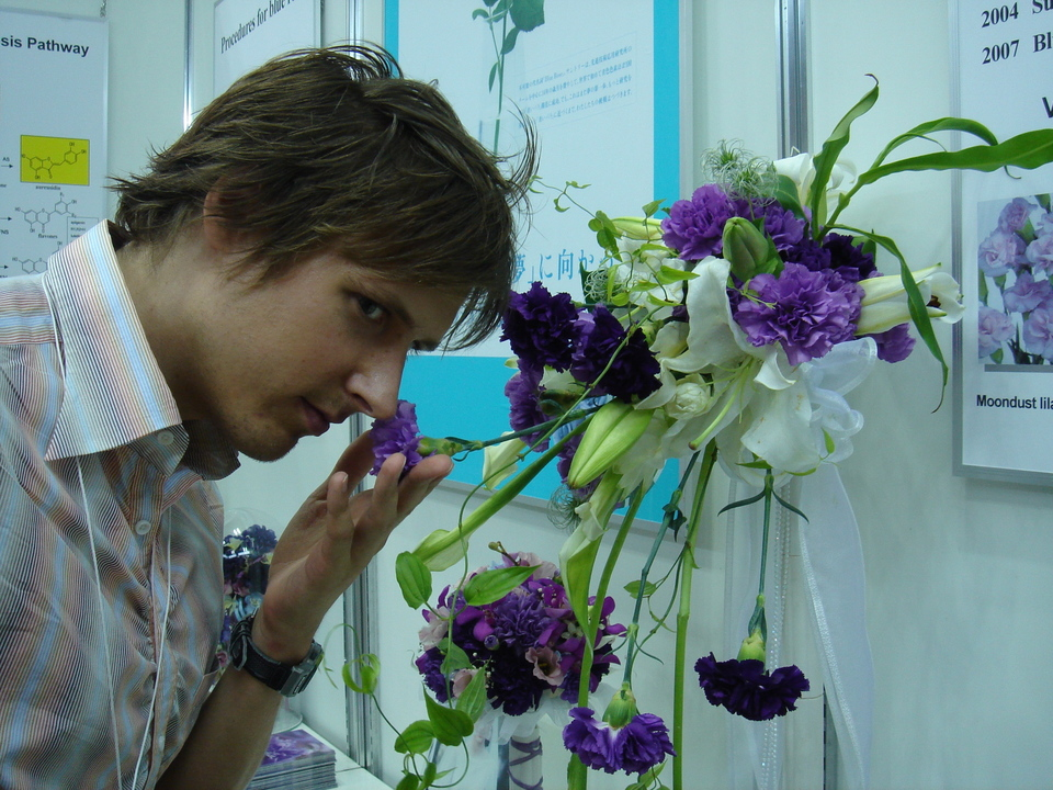 Standard georg smelling blue carnation