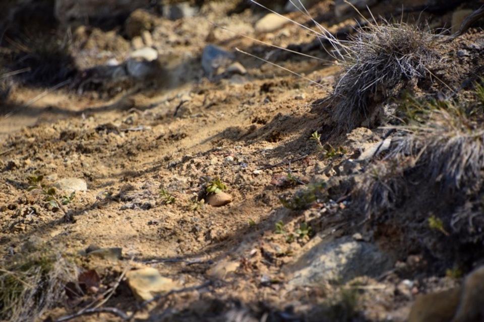 Standard burnt loamy soil