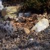 Thumb subsurface loamy soil